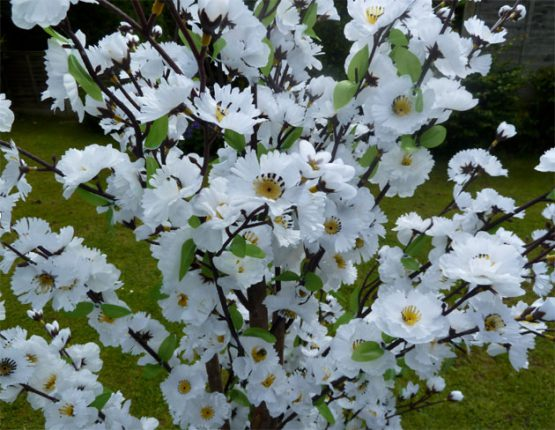 White Blossom Tree Hire
